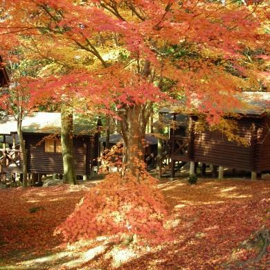 一本松公園(紅葉のバンガロー)