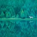 《緑響く》昭和57年(1982)長野県信濃美術館 東山魁夷館所蔵 【通期】