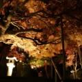 紅葉八幡宮「もみじ祭り」11月27日(日) [ライトアップ11月20日~27日]