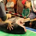 長浜鮮魚市場「市民感謝デー」12月10日(土)