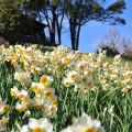 のこのしまアイランドパーク 冬の開花情報