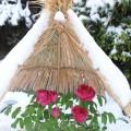 冬ぼたんまつり【筥崎宮 神苑花庭園】