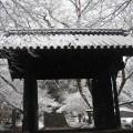 秋月「黒門」の雪景色。四季折々に魅力がある秋月
