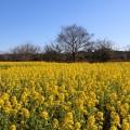 海の中道海浜公園 冬春の開花情報