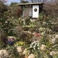 癒しの庭園