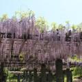 「福岡城藤棚休憩所」が開設