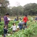 能古島で農業体験  自然と触れ合おう!
