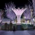 Sakura Illumination [JR Hakata Ekimae Hiroba] Beautiful full bloomed …