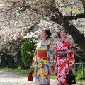 春はお店の前の桜が満開に咲きます!