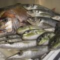 焼き物・煮物・刺身に魚平自慢の海鮮をご賞味下さい。