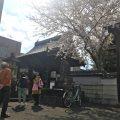安長寺の桜も見頃でした