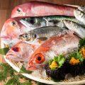■当店は『魚市場直送認定店』です!『鯛・ブリ・鰯・アジ』入荷