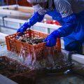【特許浄化法】水深384m!富山湾の海洋深層水による特許浄化法