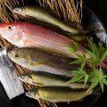 【鮮度に自信!朝獲れ鮮魚】九州産を中心に刺身・焼き・煮付など