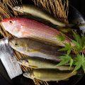 【食 材】その日仕入れた新鮮な魚をお造りにしてお出しします